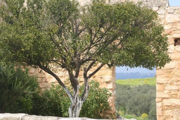 2011_2_24_2.Tag Kreta 152